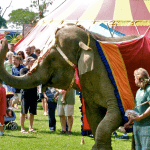 Elephant in Nyack Circus Parade, 2009